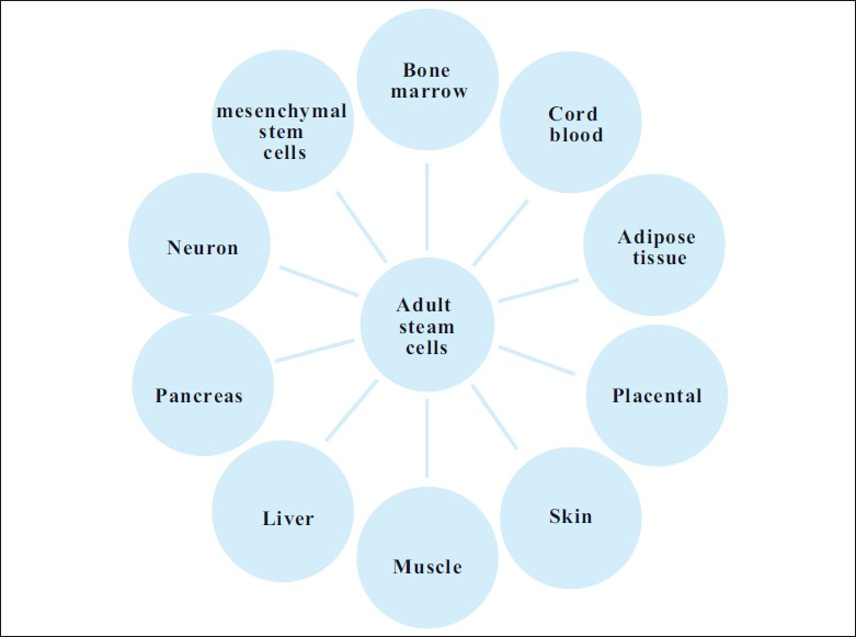 Sources of Adult Stem Cells