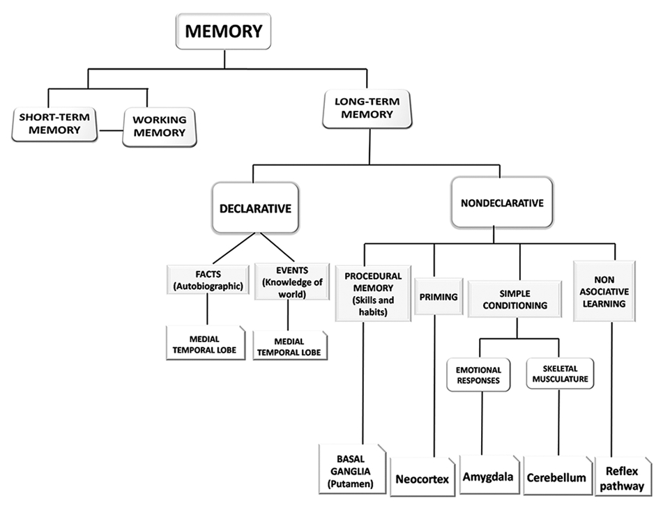 Neuroanatomy of episodic and semantic memory in humans: A brief ...