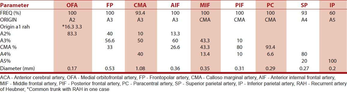 Table 4: Frequency, origin, and diameter of the cortical branches of the distal ACA