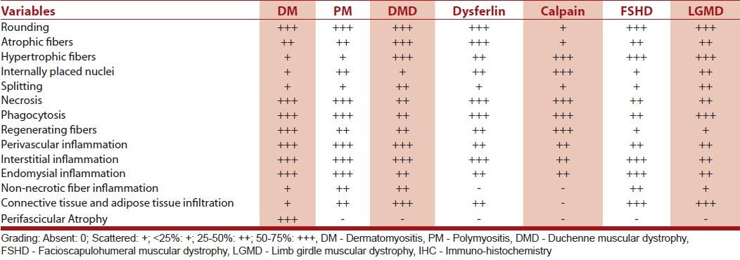 Table 2: Summary of histopathological features in inflammatory myopathies and muscular dystrophies with inflammation